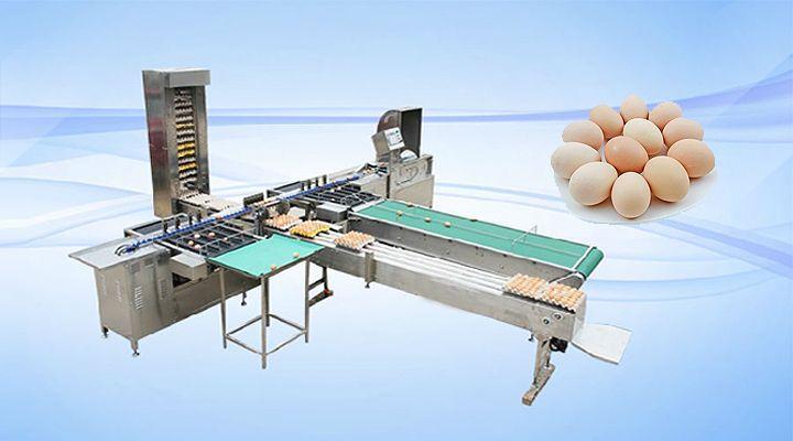 信捷雞蛋分揀機專業解決方案